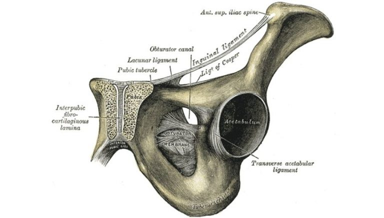 Obturator Foramen – What Is It?